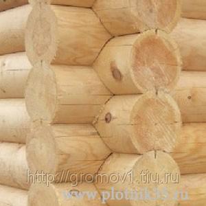 Сруб из сосны, осины, лиственницы и кедра